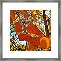 Aspen Leaves Framed Print