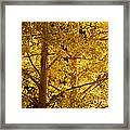 Aspen Leaves Textured Framed Print