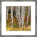 Aspen Panoramic Framed Print