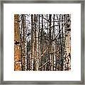 Aspen Patterns 14438 Framed Print
