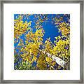 Aspen Sky Framed Print