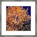 Aspen Tree Framed Print