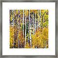 Aspen Tree Magic Framed Print