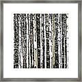 Aspen Tree Trunks Framed Print
