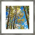 Aspens In The Clouds Framed Print