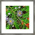 Asters And Scarlet Paintbrush On Swan Lake Trail In Grand Teton National Park-wyoming  Framed Print