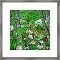 Asticou Azalea Garden Framed Print