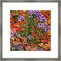 Autumn Asters Framed Print