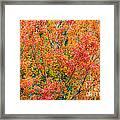 Autumn Outbeats Summer Framed Print