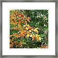 Autumn Begins At Breakheart Reservation Framed Print
