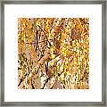 Autumn Birch Leaves Framed Print