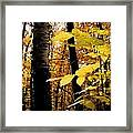 Autumn Birch Trees Framed Print