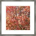 Autumn Blaze Framed Print