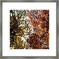 Autumn Chestnut Canopy   Framed Print