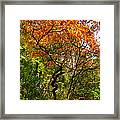 Autumn Color At Old Woman Creek 2 Framed Print