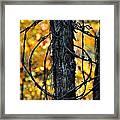 Autumn Colors 1 Framed Print