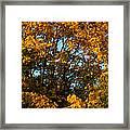 Autumn Colors 11 Framed Print