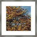 Autumn Colors 5 Framed Print