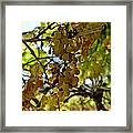 Autumn Colors In Wine Country Framed Print by Patricia Sanders