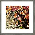 Autumn Crabapples And Tall Grass Framed Print