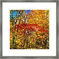 Autumn Cul-de-sac - Paint Framed Print