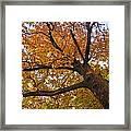 Autumn Dreams Framed Print