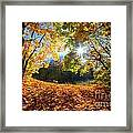 Autumn Fall Landscape In Forest Framed Print