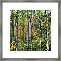 Autumn Forest Detail Framed Print