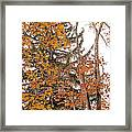 Autumn Gold Framed Print