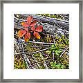 Autumn Highlights Framed Print