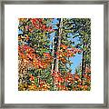 Autumn In The Forest Framed Print