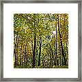 Autumn In Uw Arboretum In Madison Wisconsin Framed Print by Natural Focal Point Photography
