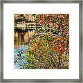 Autumn Lake And Swan Framed Print