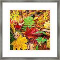 Autumn Leaf Salad Framed Print