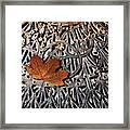 Autumn Leave On Iron Grate Framed Print