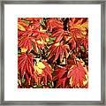 Autumn Leaves 07 Framed Print