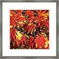 Autumn Leaves 08 Framed Print