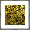 Autumn Leaves 091 Framed Print