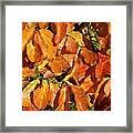 Autumn Leaves 82 Framed Print