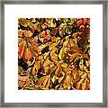 Autumn Leaves 83 Framed Print