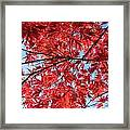 Autumn Leaves And Blue Sky Framed Print