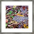 Autumn Leaves In Creek Bed Framed Print