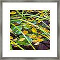 Autumn Leaves In Pond Framed Print