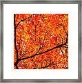 Glorious Autumn Leaves Framed Print