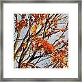 Autumn Orange Framed Print by Guy Ricketts