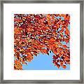 Autumn Orange Framed Print