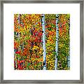 Autumn Palette Framed Print by Mary Amerman