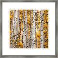Autumn Quaking Aspen Framed Print