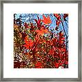 Autumn Reach  Framed Print