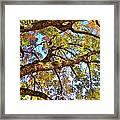 Autumn Revealed Framed Print